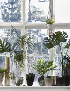 Plantes intérieur fenetre