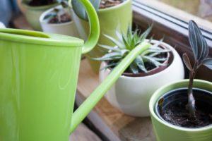 Plante intérieur arrrosage