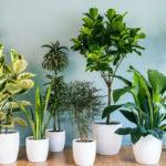 Comment prendre soin de ses plantes d'intérieur