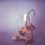 bulbe amaryllis fanée